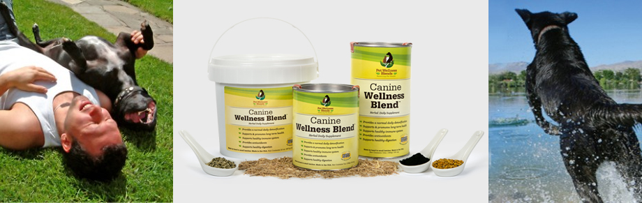 Canine Pet Wellness